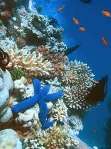 arrecifesde coral y una estrella de mar