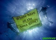 campaña greepeace en defensa del atún rojo