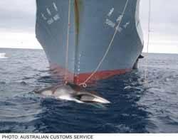 ballenero japones cazando ballenas en el Antártico