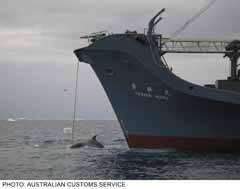 ballena capturada en el antártico