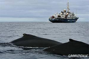 El buque Esperanza de GreenPeace vigila las ballenas