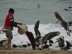 basura para las aves