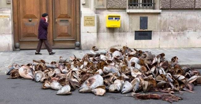 cabezas de Atún frende al Ministerio de Pesca en Paris