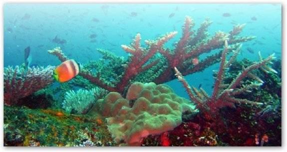 corales y su habitats