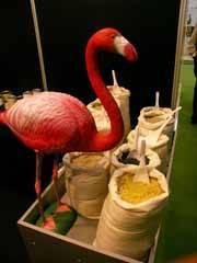 un flamenco, mascota de cultura de la sal