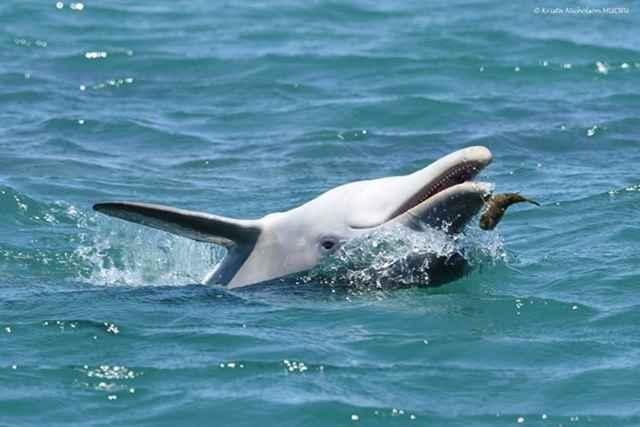 delfín y pez globo