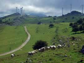 búcolica foto de una central eolica y un prado con ovejas