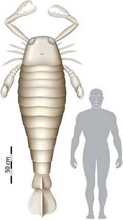 comparación del escorpion marino con el hombre