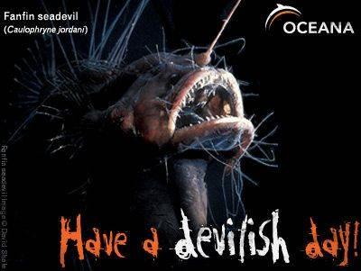 fanfin seadevil