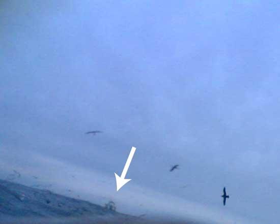albatros filman a ballenas