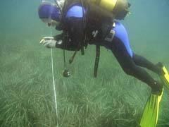 Investigando las praderas marinas