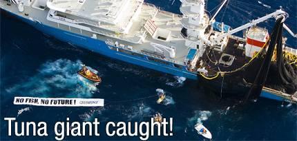 Acoso de Greenpeace al atunero Albatun Tres