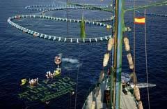Greenpeace en una protesta sobre la pesca del atún