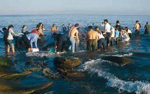 voluntarios intentan salvar la ballena varada