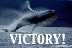 las ballenas seguiran viviendo