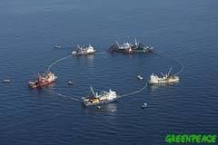 buques cerqueros pescando atún