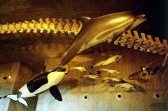 Réplicas de cetáceos Museo Mundo Marino, Parque Dunar