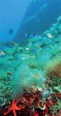 Biodiversidad marina en las Islas Columbretes