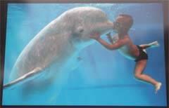 Cria de ballena beluga con niño
