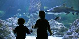 El Gran Azul, Palma Aquarium