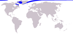 distribución geográfica del narval