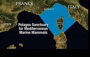 Santuario Marino de Pelagos (Francia)