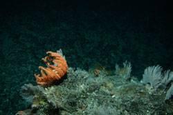 Estrella de Mar en una corriente marina