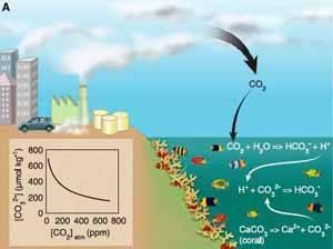 acidificación océano
