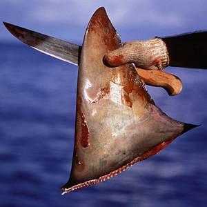 aleta de tiburón (fins attached)
