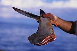 aleteo, corte de aletas de tiburón