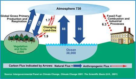 almacenamiento anual de carbono por el océano