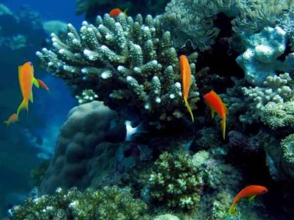 los arrecifes de coral se disuelven