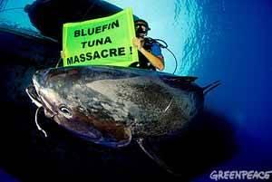 atún rojo, masacre