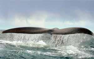 vigilia de las ballenas, Chubut