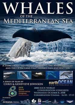 ballenas en el Mar Mediterráneo