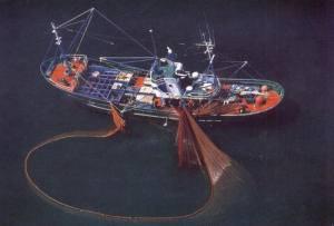 barco cerquero