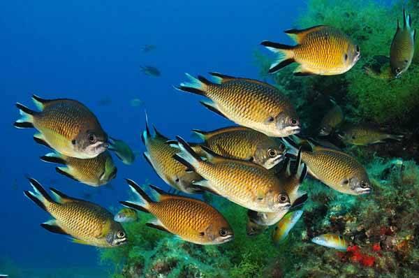 biodiversidad marina en las Islas Canarias