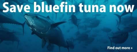 salvemos al Atún rojo del Mar Mediterráneo