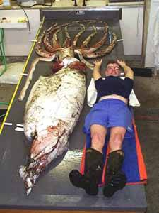 calamar gigante junto a un hombre