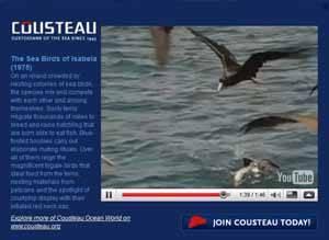 Google Ocean, capa Jacques Cousteau