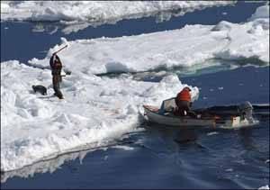 cazadores de focas