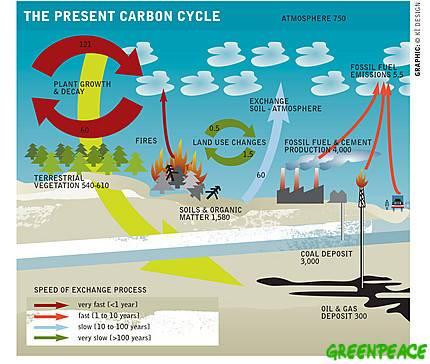 ciclo del carbono, gráfico de Greenpeace
