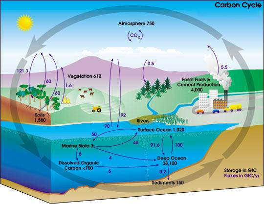 clico del carbono en el océano