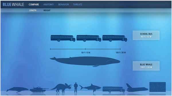 comparación medida Ballena azul y autobús