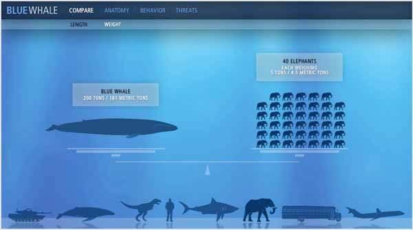 comparación peso Ballena azul y elefante