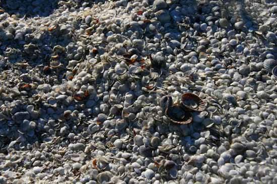 conchas esparcidas en las orillas del Mar de Aral