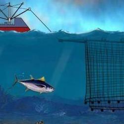 conservar el atún rojo del Mediterráneo