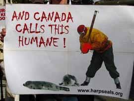 contra la matanza de focasen Canadá