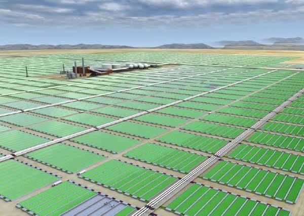 cultivo a gran escala de microalgas