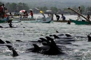 delfines rescatados en Filipinas por pescadores